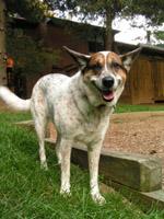 tooney the doggy